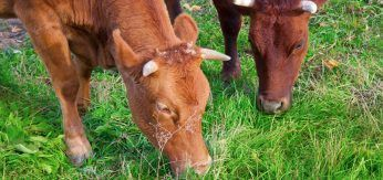"""""""Connected cows"""" are destined to become a reality in farms"""